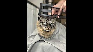 Oskar gets a haircut
