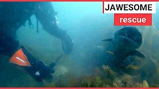 Super gran saved a shark off the Devon coast