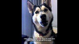 Funny animal 😅