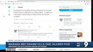 Marana bee attack