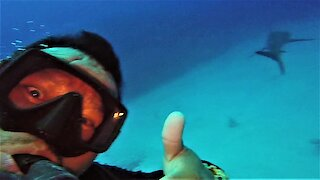 Scuba diver surprised by appearance of shark as he comes over the coral reef