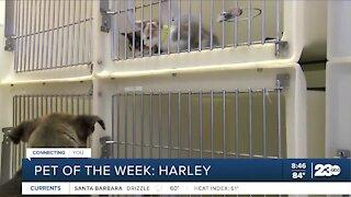 Pet of the Week: Harley