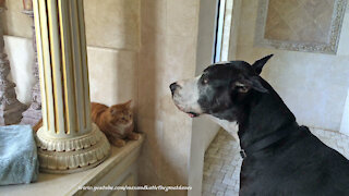 What do you think this dog is trying to say to the cat?