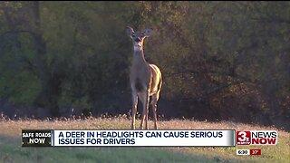 Deer & Vehicle Collisions