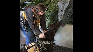 Service dog meets raptor from Jurassic Park