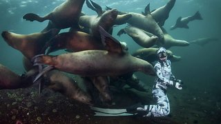 Don't Eat Her! Awesome Photos Show Slippery Sea Lions Swarming Diver