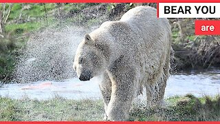 Russian polar bear has been unveiled at a Yorkshire wildlife park