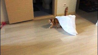 Kitten caught in plastic bag makes hilarious dash