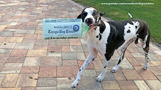 """Great Dane Delivers Perfect """"Read All About It"""" Newspaper Headline"""