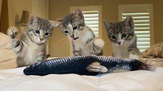 Kitties attack fish