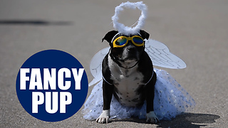 Britain's most pampered pooch