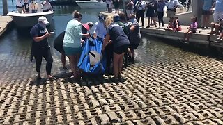 Injured manatee released in Boynton Beach