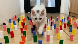 Cats and Domino nice it will keep relaxing