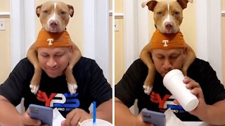 Pit Bull puppy truly loves his owner, can't stop hugging him