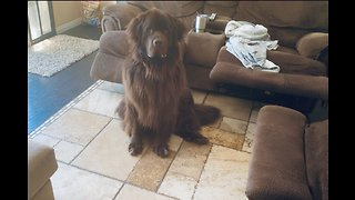 Smart Newfoundland learns to identify different objects