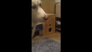 Confused dog can't find hiding kitten