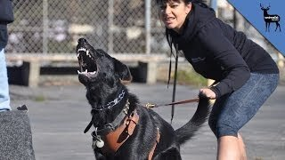 What makes a dog full aggressive?
