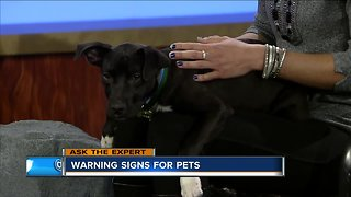 Ask the Expert: Warning signs for pets