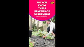 Top 3 Health Benefits Of Gardening *