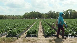Polk County nonprofit push to get migrant farm workers access to COVID-19 vaccine