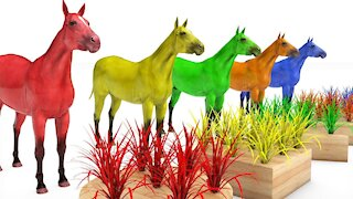 Learn Color Learn Shapes Animals Horse Horse W Grass Cartoon Nursery Rhymes for Children