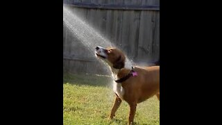 How to wash a dog, a video that explains this, watch with us