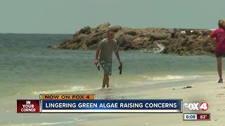 Can algae blooms harm human health?