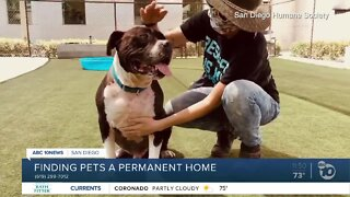 Pet of the Week: Captain