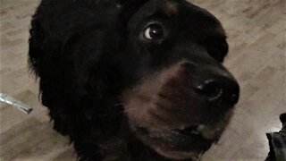 Talking Dog Hilariously Demands a Snack