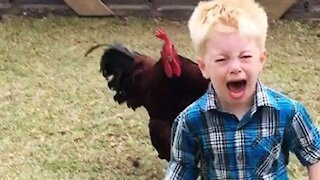 Funny Chickens Chasing Troll Babies and Kids   Funny