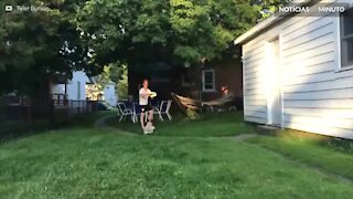Cão erra no momento de pegar o Frisbee