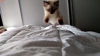 Kitten is the cutest alarm clock ever!