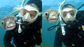 Pufferfish Wants A Selfie