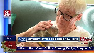 Severely matted dog finds new home