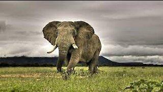 The wildlife, documentary, wildlife park, wildlife photography