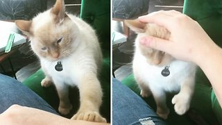 Needy cat demands extra pets from owner