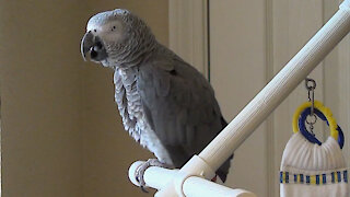 Hungry parrot adds pizza to his grocery list