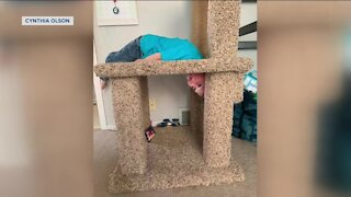 Waukesha boy rescued after getting head stuck in a cat scratching post