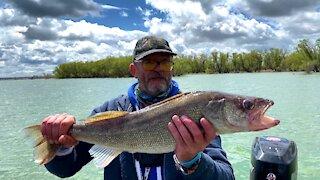 Master Angler Walleye Release