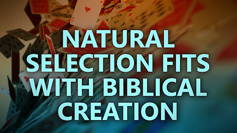 Natural Selection Fits with Biblical Creation