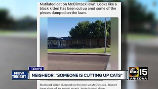 Tempe neighborhood concerned after cats found mutilated