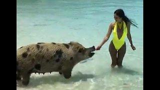 Beautiful Scenery. Bahamas Pig Beach