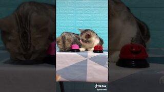 Cute cats ringing bells