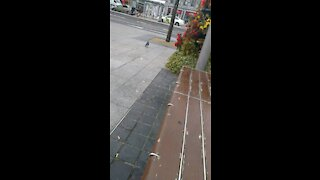 Galway city after lockdown (covid 19)