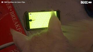 Ce chat chasse les souris... sur un smartphone!