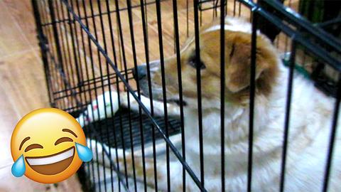 """A DOG WATCHING TV MEET """"DIGONG"""""""