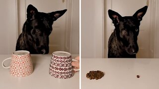 The only acceptable way to bamboozle a doggo