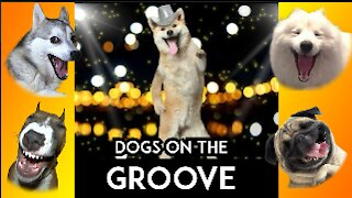 SEE HOW THESE DOGS SHOW THEIR DANCE MOVES