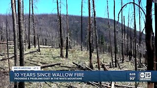 10 years after Wallow Fire, problems still remain in White Mountains
