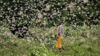 Somalia Declares National Emergency Over Locust Invasion